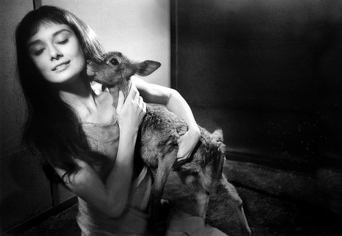 Hepburn with her pet fawn, Ip.